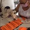 Kolping do Piauí está na luta contra o Coronavírus: Importante é preservar a vida