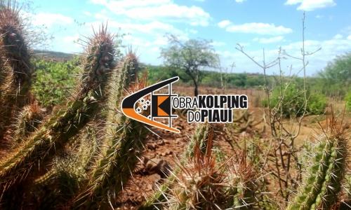 Obra Kolping do Piauí execulta o projeto 1 Milhão de Cisternas